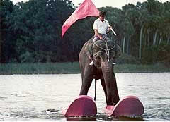 Did You Hear the One About the Water Skiing Elephant?